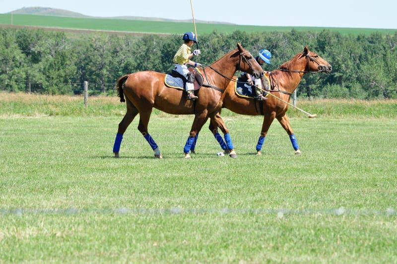 Polo på ranchen för stång U, fotografering för bildbyråer
