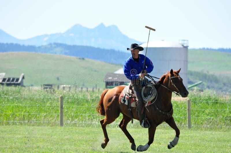 Polo på ranchen för stång U, arkivbild