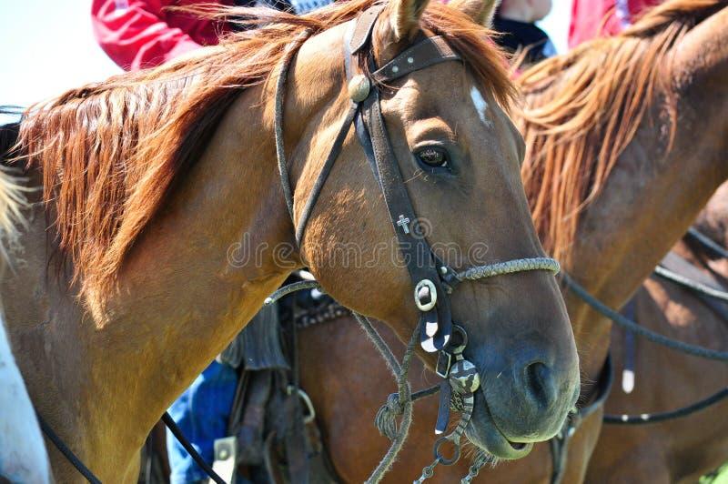 Polo på ranchen för stång U royaltyfri bild