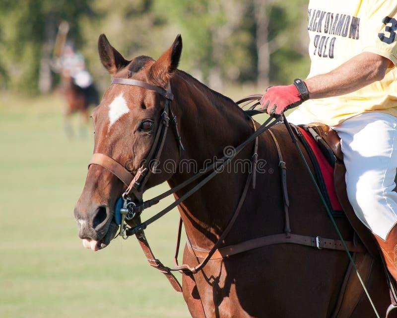 Polo på svarta Diamond Polo Club royaltyfria foton