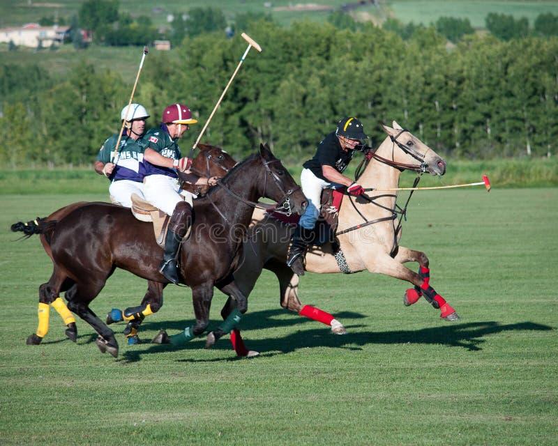 Polo på svarta Diamond Polo Club arkivfoto