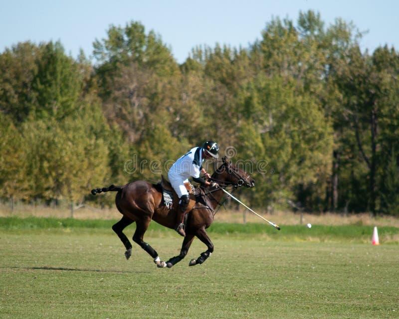 Polo på svarta Diamond Polo Club royaltyfri foto