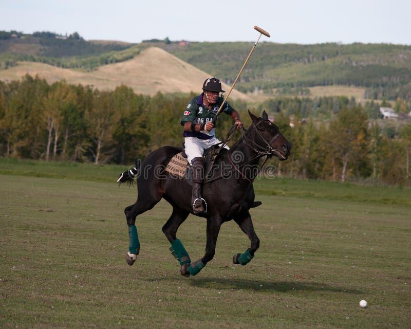 Polo på svarta Diamond Polo Club fotografering för bildbyråer