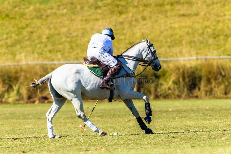 Polo Player Gray Horse Field modig handling fotografering för bildbyråer