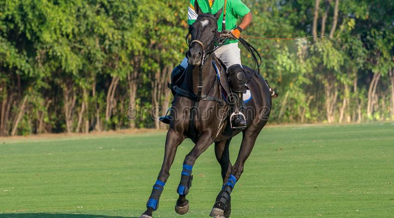 Polo Player Playing Polo Horse under lekarna arkivfoto