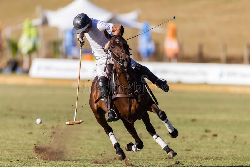 Polo Player Pony Action Ball royaltyfri bild