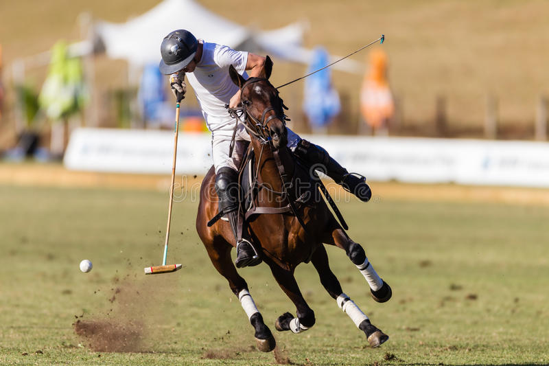 Polo Player Pony Action Ball royalty free stock image