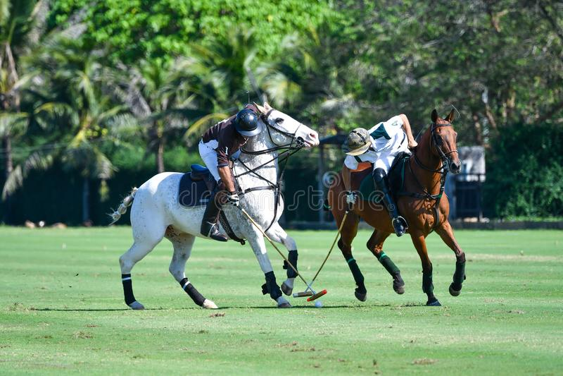 Polo Player skyddar en poloboll royaltyfri fotografi