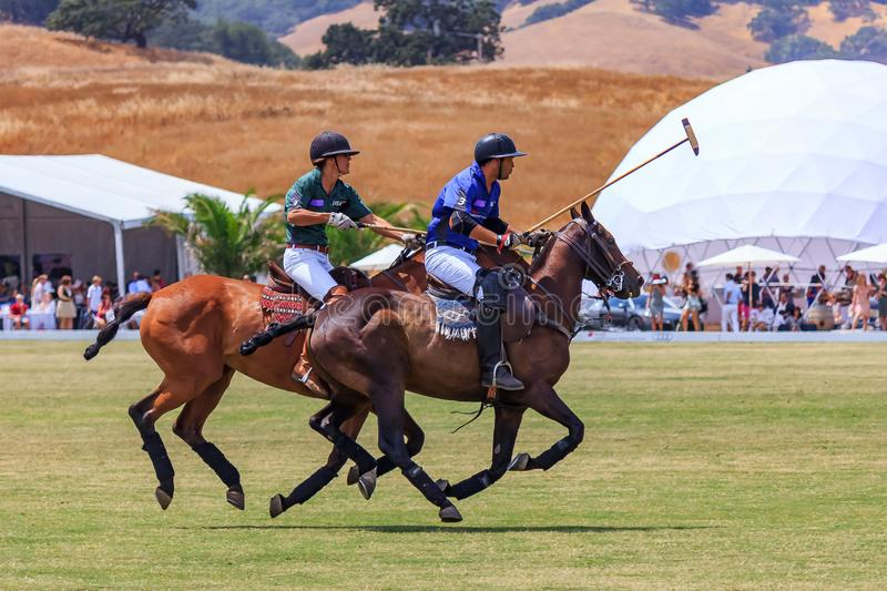 Polo players riding on horseback after the polo ball at high speed. Santa Rosa, United States - August 03, 2014: Polo players on the field riding on horseback royalty free stock image