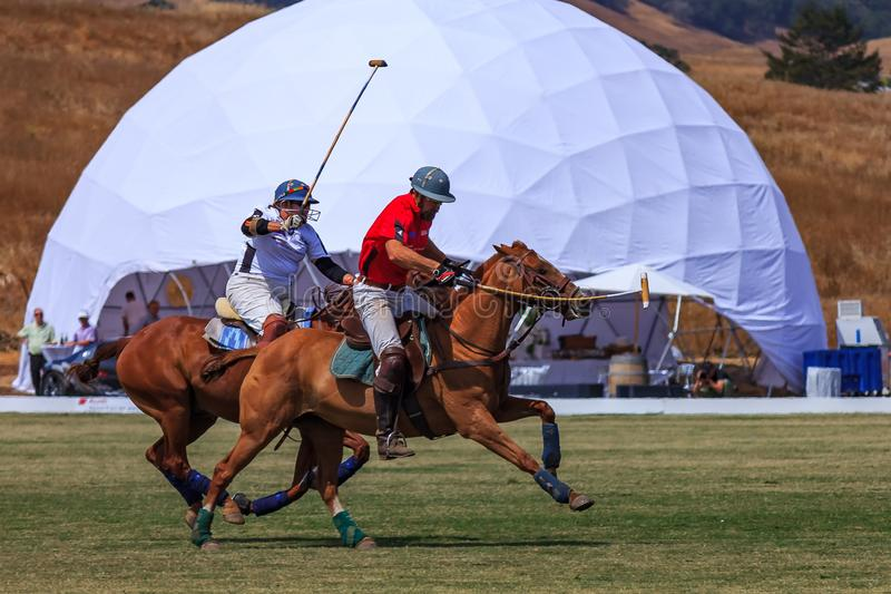 Polo players riding on horseback after the polo ball at high speed. Santa Rosa, United States - August 03, 2014: Polo players on the field riding on horseback royalty free stock photos