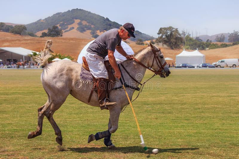 Polo players riding on horseback getting ready to hit the polo ball at high speed. Santa Rosa, United States - August 03, 2014: Polo player on the field riding stock photo