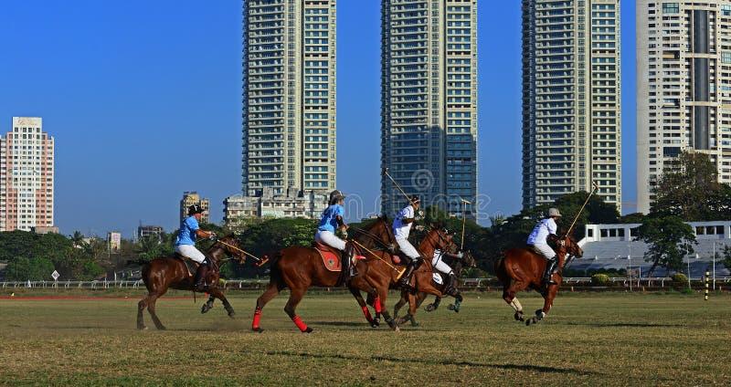 Polo Playing royaltyfri fotografi