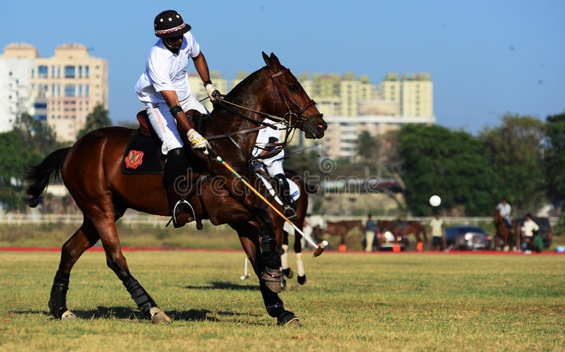 Polo Playing arkivfoton