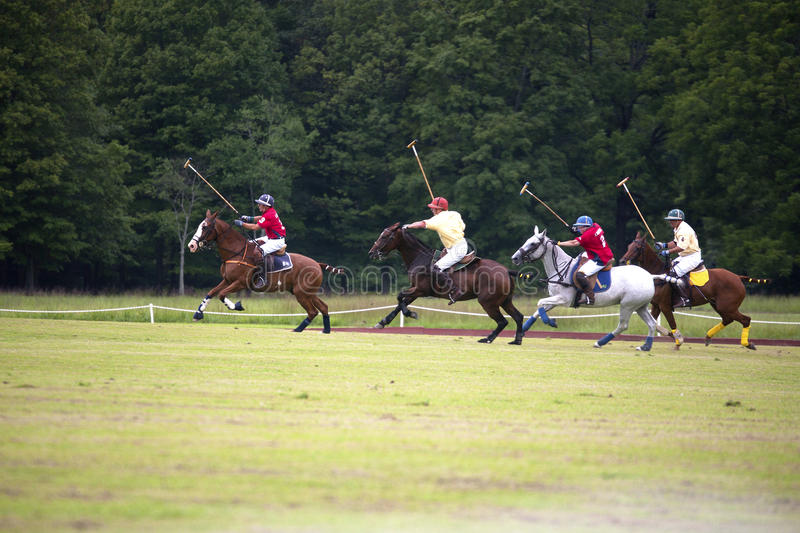 Polo Ponies Editorial Photography
