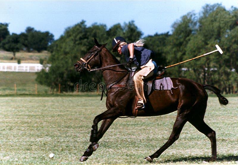 Polo Practice stock photo