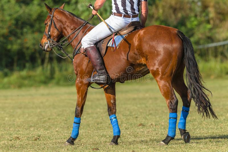 Polo Referee Rider Pony Unidentified foto de stock royalty free