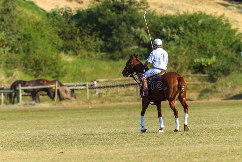 Polo Rider Horse Field arkivbild