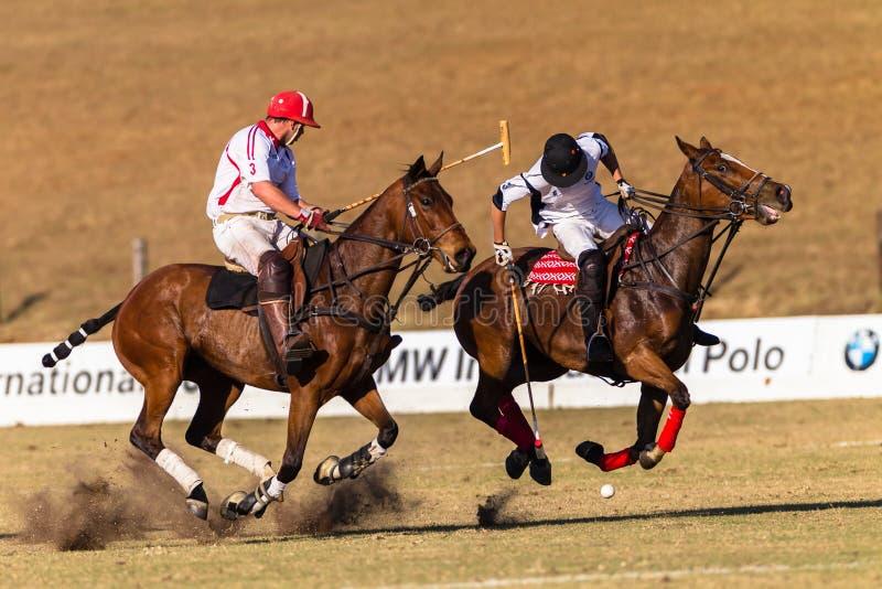 Polo Rider Horse Play Action royaltyfria bilder