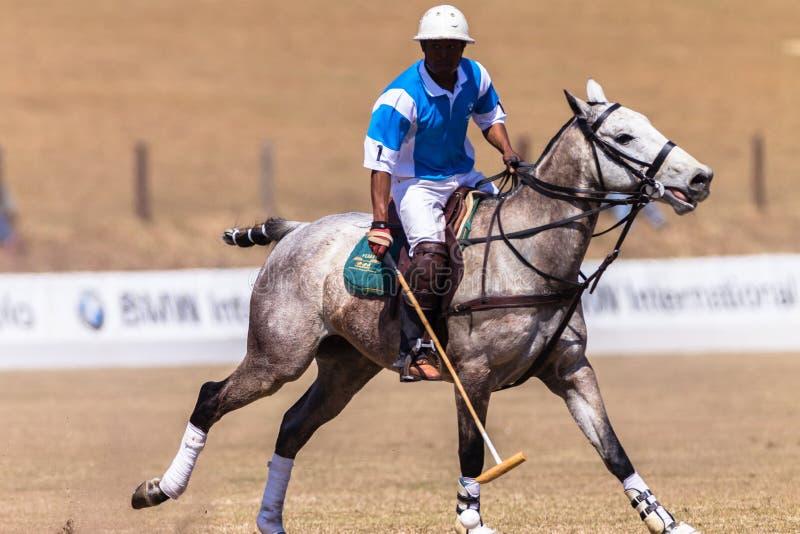 Polo Rider Horse Play Action royaltyfri fotografi