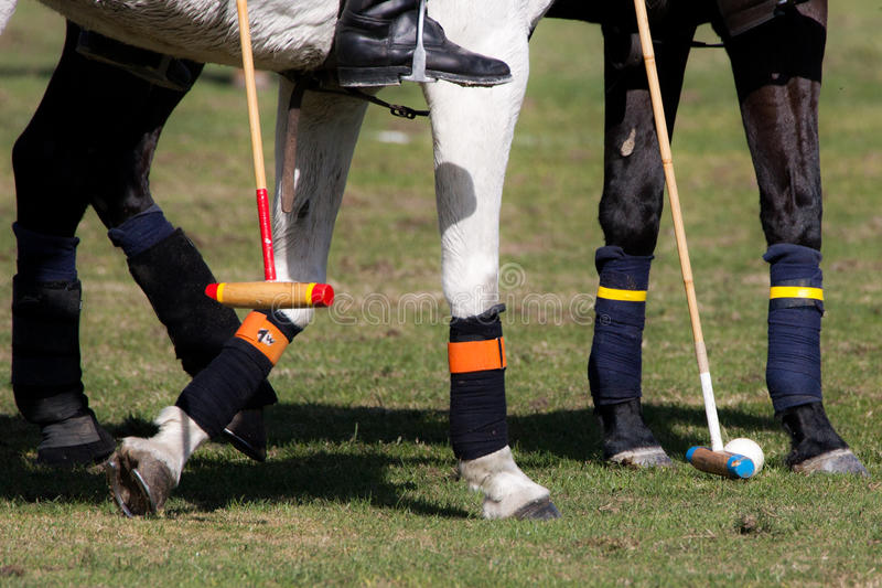 Polo Sport royalty-vrije stock afbeeldingen