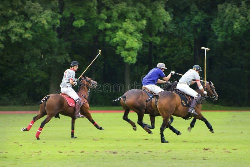 Polo Sport royaltyfri foto