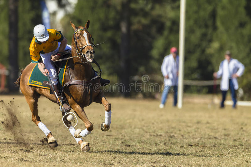 PoloCrosse Horse Rider Action stock images