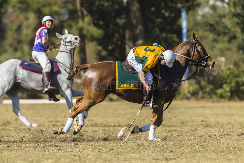PoloCrosse Horses Riders Action stock image