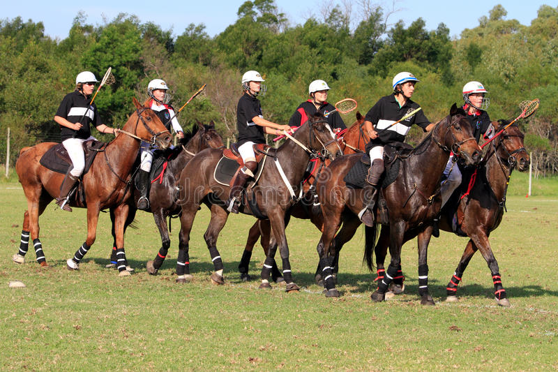 Polocrosse Line Up royalty free stock photography