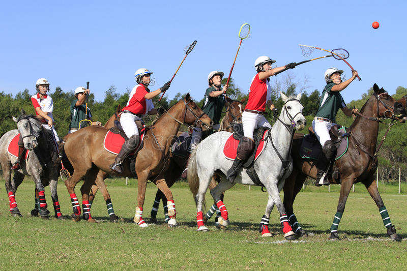 Polocrosse Team Line Up royalty free stock image