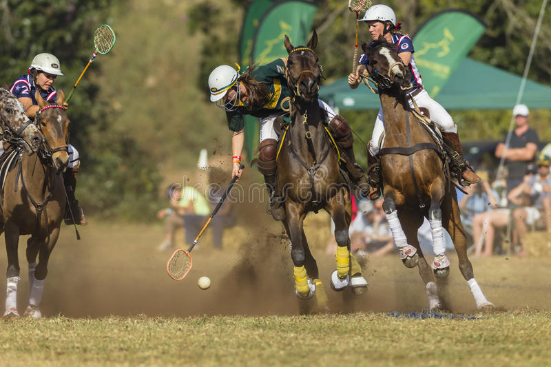 PoloCrosse World-Cup Equestrian Action royalty free stock image