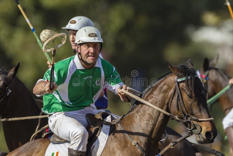PoloCrosse World-Cup Horses Ireland royalty free stock photo