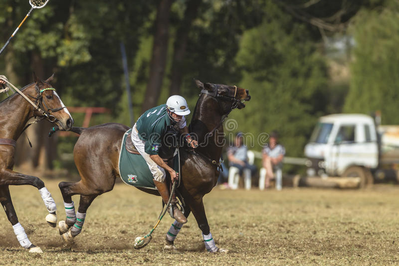 PoloCrosse World-Cup Player Action royalty free stock photos