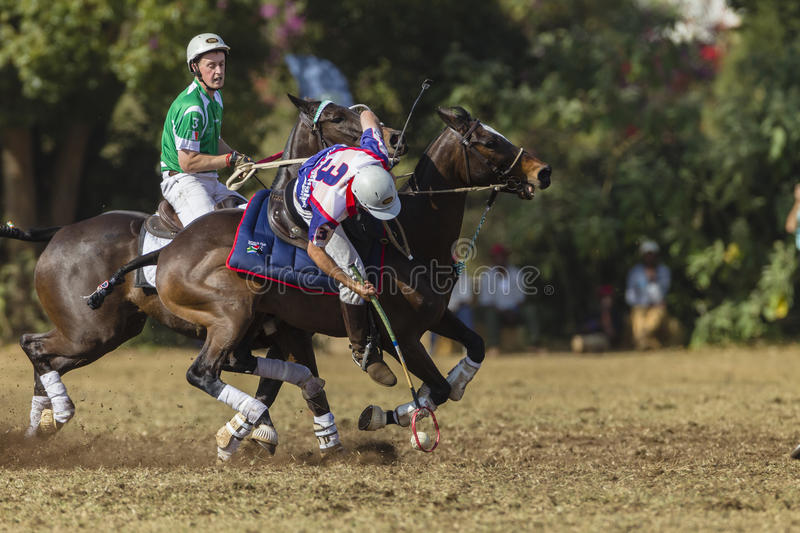 PoloCrosse World-Cup Rider Action royalty free stock photo