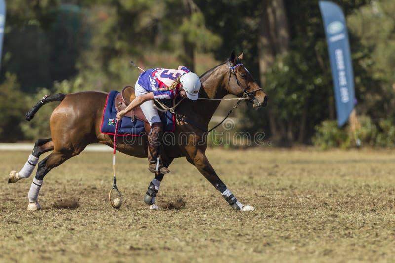 PoloCrossewereldbeker Rider Action royalty-vrije stock fotografie