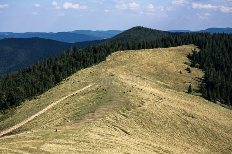 Polonyna nei Carpathians immagini stock libere da diritti