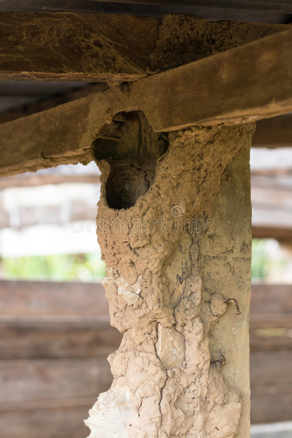 Polos de madeira velhos com formigueiro concreto imagens de stock