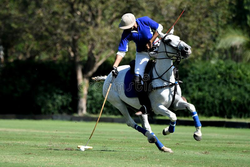 Polospelarebruk en klubbaslagboll i turnering royaltyfri fotografi