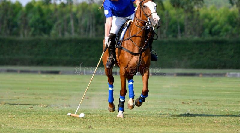 Polospelaren använder poloklubban royaltyfri bild
