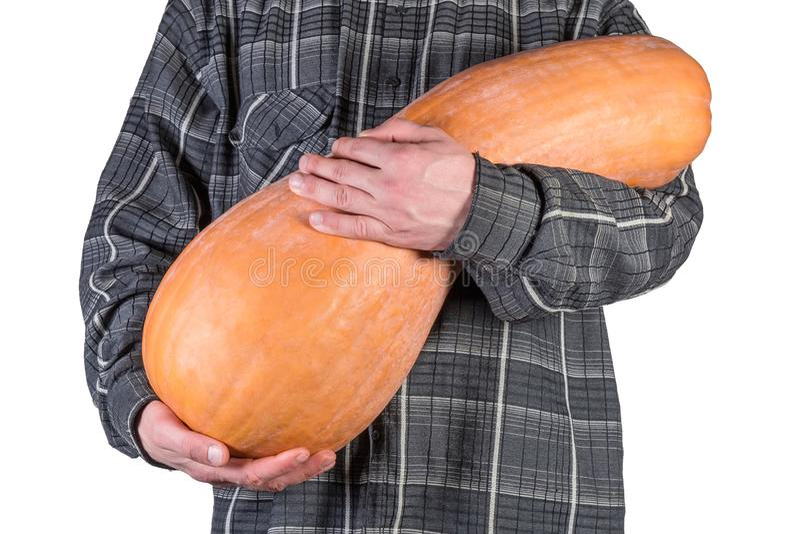 Polpa de butternut grande nas mãos humanas no fundo branco imagem de stock royalty free