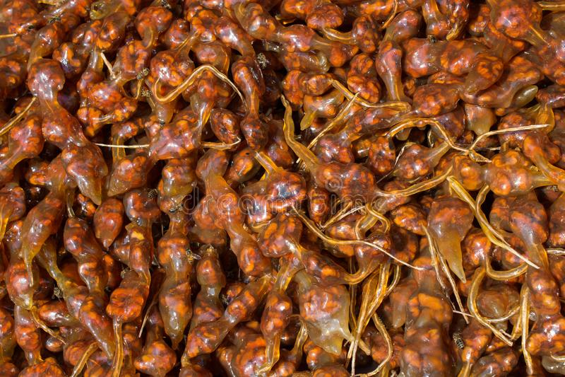 Polpa secada do fruto como o alimento de petisco fotos de stock royalty free