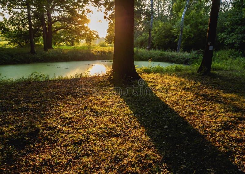 Polsk skog fotografering för bildbyråer
