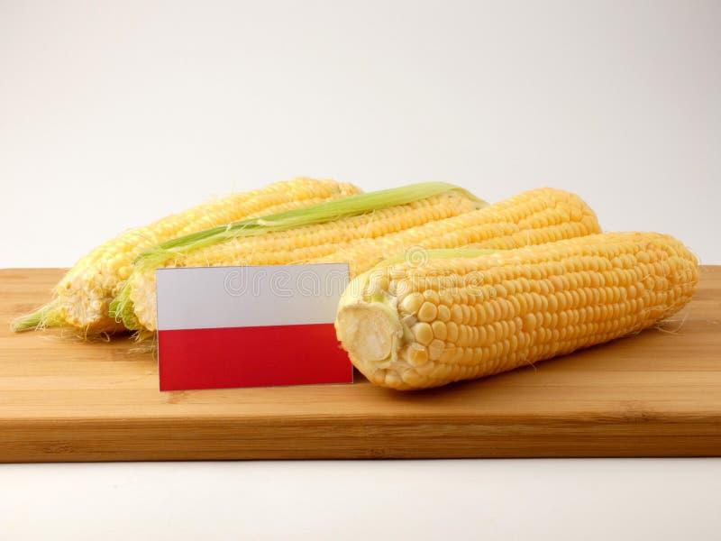 Polska flaga na drewnianym panelu z kukurudzą odizolowywającą na białym plecy obrazy royalty free