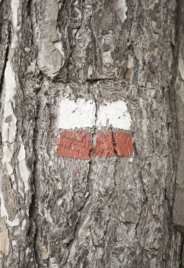 Polska flaga na drzewie zdjęcie stock