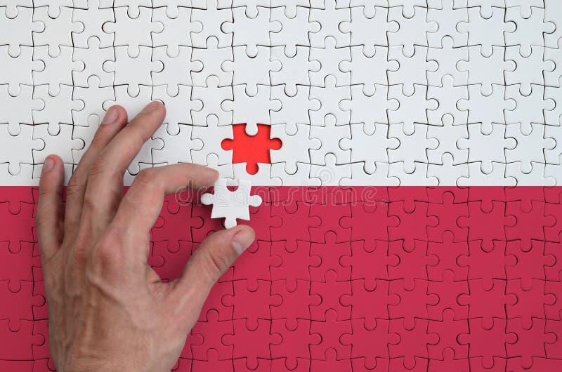 Polska flaga przedstawia na łamigłówce którą składać uzupełnia mężczyzna ` s ręka, fotografia royalty free
