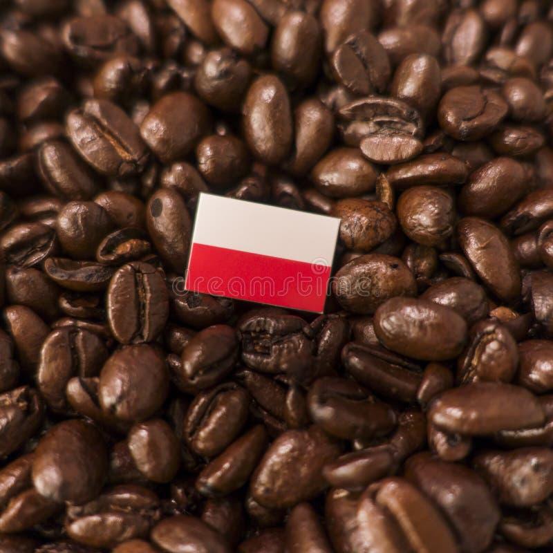 Polska flaga umieszczająca nad piec kawowymi fasolami obraz stock