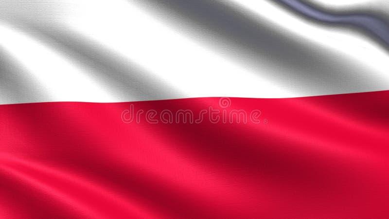 Polska flaga z falowanie tkaniny teksturą, fotografia royalty free