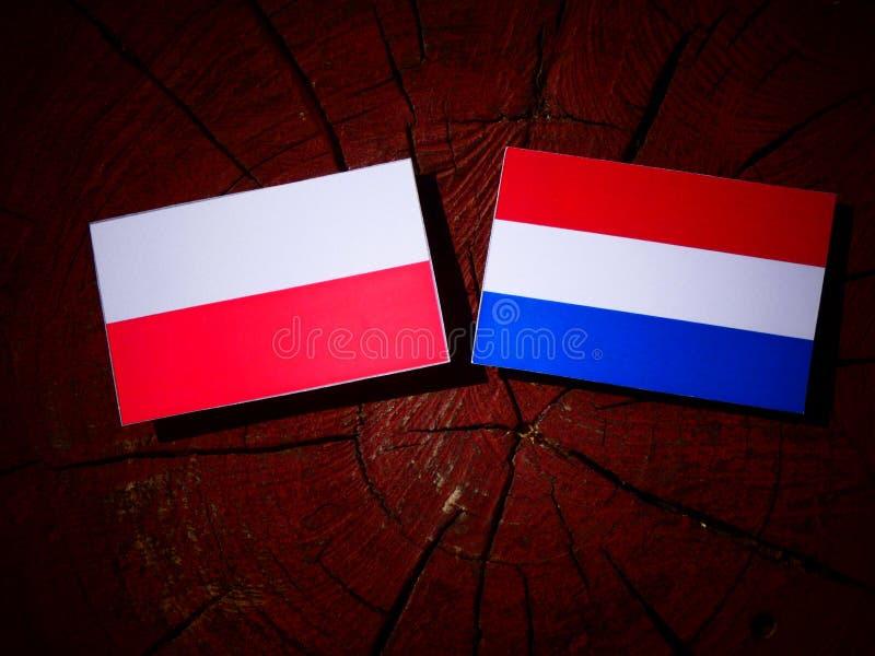 Polska flaga z holender flaga na drzewnym fiszorku odizolowywającym obraz royalty free
