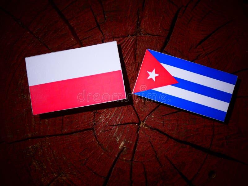 Polska flaga z kubańczyk flaga na drzewnym fiszorku odizolowywającym fotografia royalty free