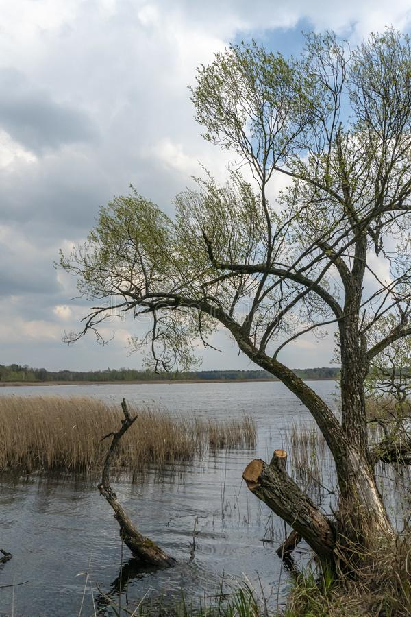 Polska, szlak przyrody nad jeziorem obrazy royalty free