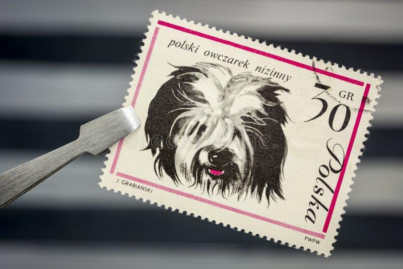 Polski Niżowy Sheepdog na rocznik poczty znaczku fotografia royalty free